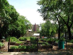 Corner-Farm-2011